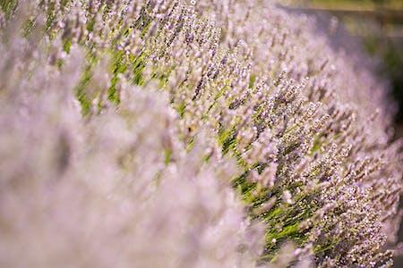 10 plantes aromatiques pour la cuisine que vous trouverez à Gérone