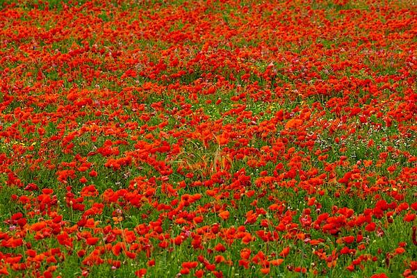 Los 5 rincones más floridos de Girona y la Costa Brava