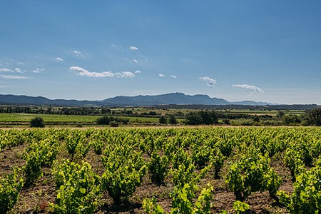 11 wineries of the Alt Empordà where you can enjoy wine tourism