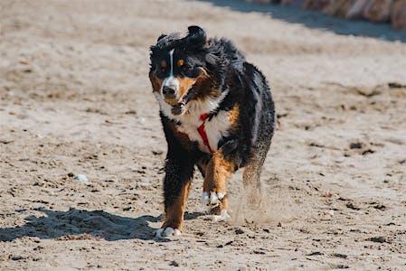 Playas donde se aceptan perros en la Costa Brava