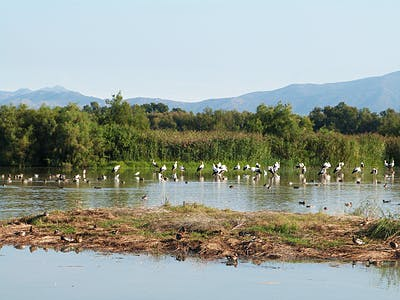 A trip to the Aiguamolls de l'Empordà Natural Park