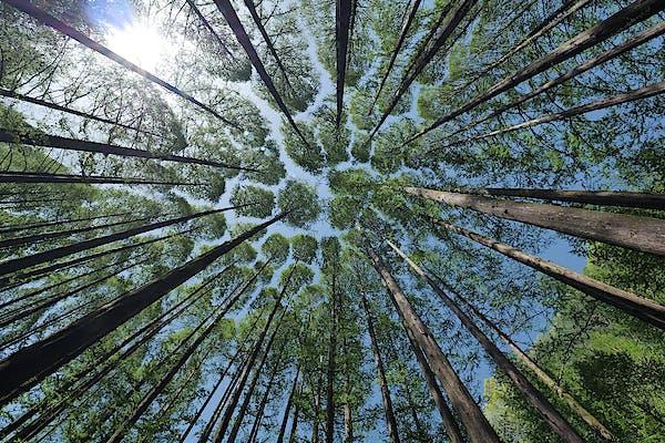 Els banys de bosc: la teràpia de la natura