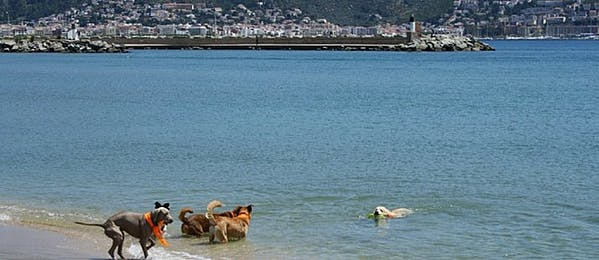 Beaches that accept dogs on the Costa Brava